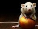 «Жила-была на свете Крыса…»